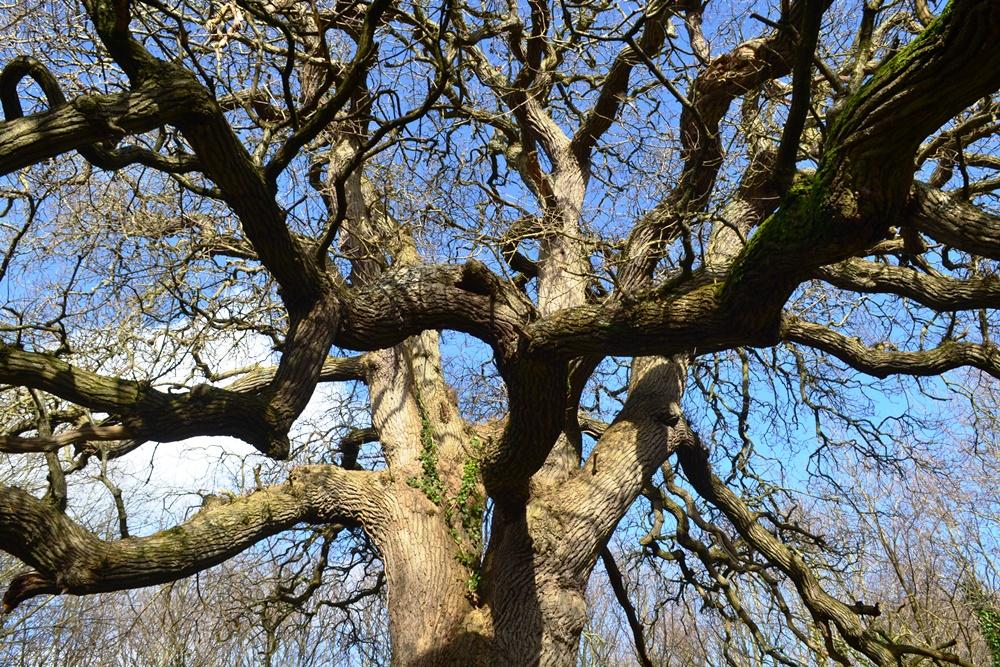 oaktreeplaylane