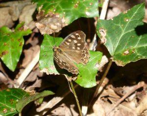 gg-butterfly
